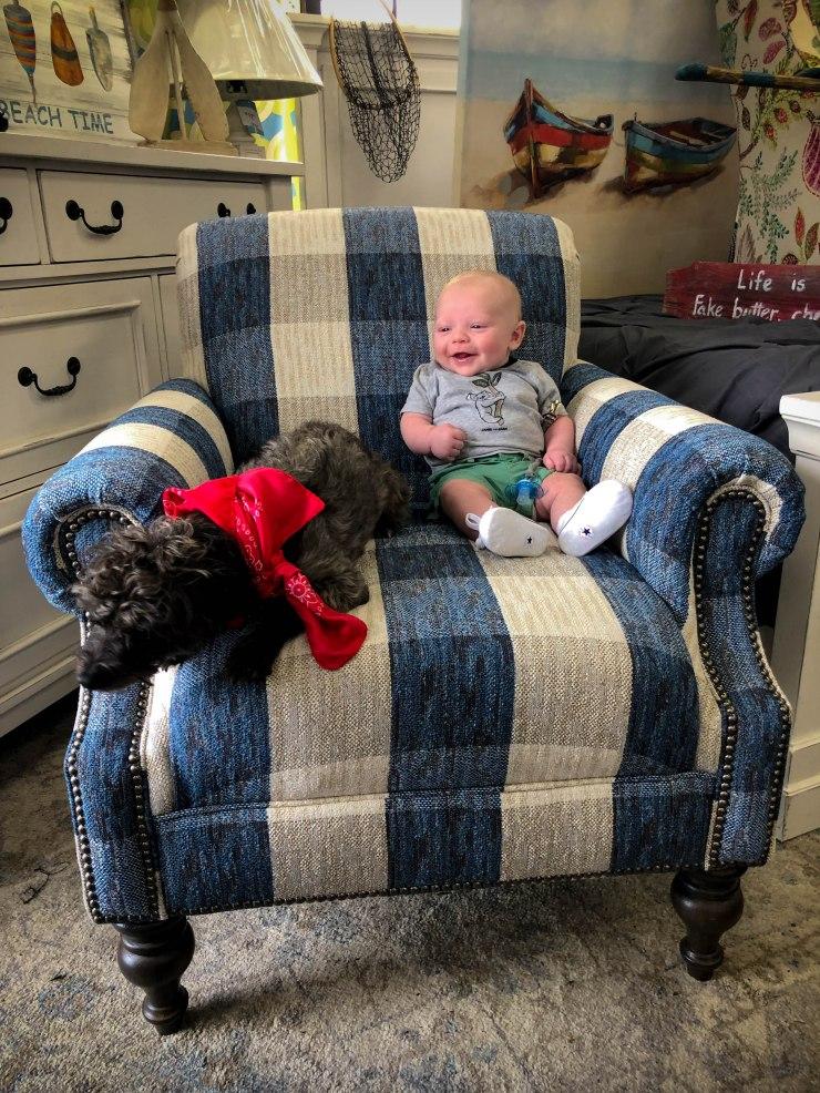 baby dog chair pat coslett simplicity furniture evansville